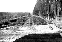 Corduroy road of felled and trimed trees in Bulge, winter 1944